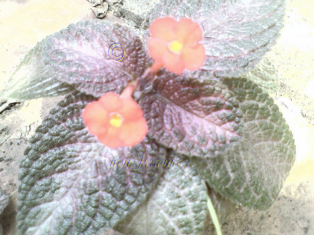 Episcia Ruby Red Dress